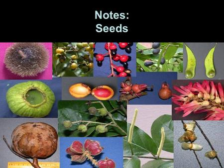 Notes: Seeds.