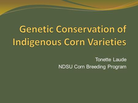 Tonette Laude NDSU Corn Breeding Program. Rationale Indigenous corn varieties consist of heterogeneous population. Preservation of indigenous varieties.
