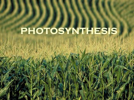 PHOTOSYNTHESIS. 6CO 2 + 6H 2 O  C 6 H 12 O 6 + 6O 2.