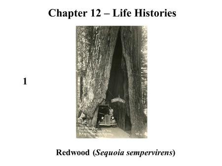 Redwood (Sequoia sempervirens) 1 Chapter 12 – Life Histories.