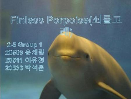 Finless porpoise live in wide range. They live in Pacific Ocean, Indian Ocean, and Persian Gulf. Sometimes, Finless porpoise come to Korea's Yellow Sea.