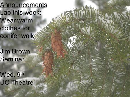 Announcements Lab this week: Wear warm clothes for conifer walk Jim Brown Seminar Wed. 9 th UC Theatre.