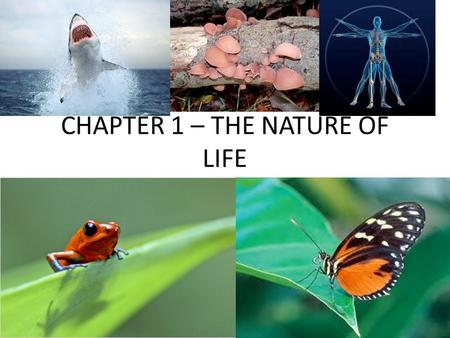 CHAPTER 1 – THE NATURE OF LIFE THE NATURE OF LIFE.