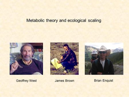 Metabolic theory and ecological scaling Geoffrey WestJames Brown Brian Enquist.