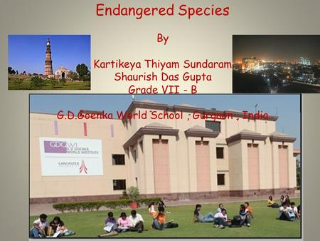 Endangered Species By Kartikeya Thiyam Sundaram Shaurish Das Gupta Grade VII - B G.D.Goenka World School, Gurgaon, India.