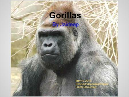 Gorillas By Jaideep May 15, 2012 Renzulli Independent Project