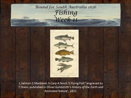 Bound for South Australia 1836 Fishing Week 11 1.Salmon 2.Mackarel. 3.Carp 4.Tench 5.Flying Fish engraved by T.Dixon, published in Oliver Goldsmith's.