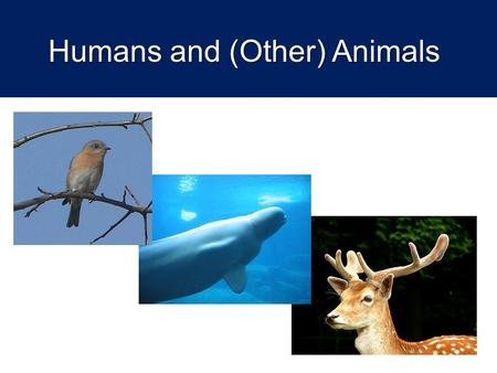 Humans and (Other) Animals. Lesson aims  To introduce issues about the moral status of animals  To consider the range of biblical perspectives on this.