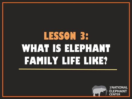 LESSON 3: WHAT IS ELEPHANT FAMILY LIFE LIKE?. ADULT FEMALE ELEPHANT ADULT FEMALE ELEPHANT AN ADULT FEMALE IS KNOWN AS A COW African cow Asian cow.