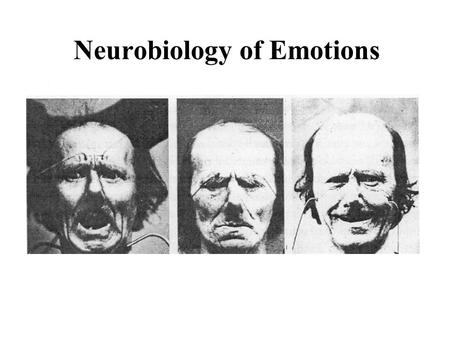 Neurobiology of Emotions. The Main Camps 1. Basic emotions: The categorical approach 2. Biological pieces of emotions: The Componential approach 3. Societies.