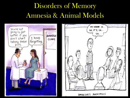 Disorders of Memory Amnesia & Animal Models