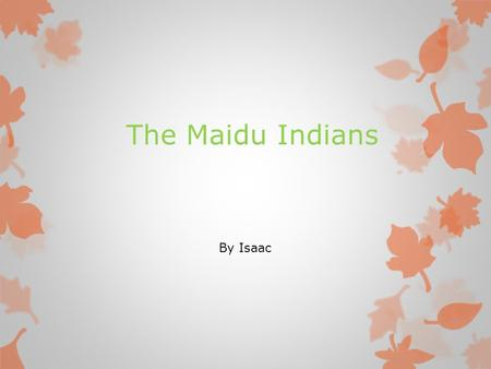 The Maidu Indians By Isaac. The Maidu Who in the world are the Maidu? It is a native American tribe. The Maidu live in Northern California and Sierra.