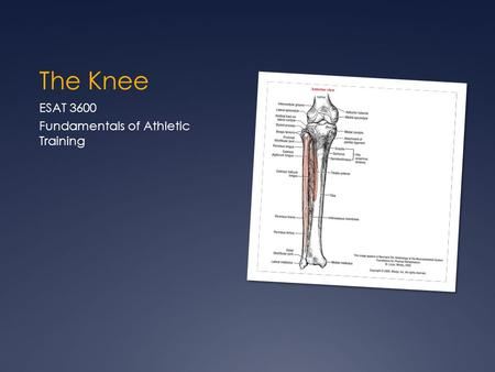 The Knee ESAT 3600 Fundamentals of Athletic Training.