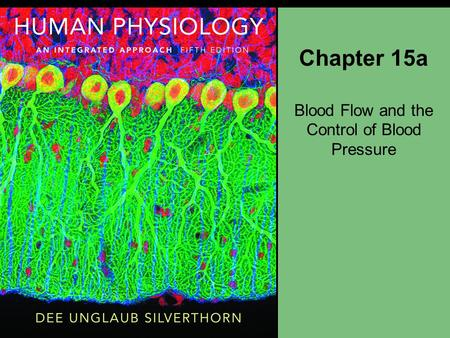 Chapter 15a Blood Flow and the Control of Blood Pressure.