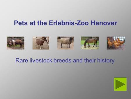Pets at the Erlebnis-Zoo Hanover Rare livestock breeds and their history.