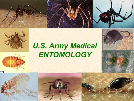 U.S. Army Medical ENTOMOLOGY. U.S. Army Medical Entomology Program COL Scott Gordon Medical Entomology Consultant to the Army Surgeon General.