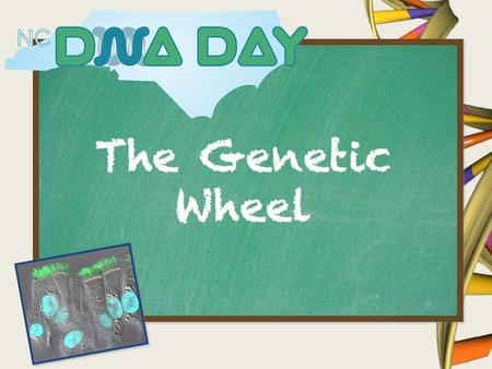 What is DNA? Variations in DNA can cause visible changes in different individuals.