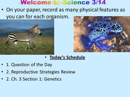On your paper, record as many physical features as you can for each organism. Today's Schedule 1. Question of the Day 2. Reproductive Strategies Review.