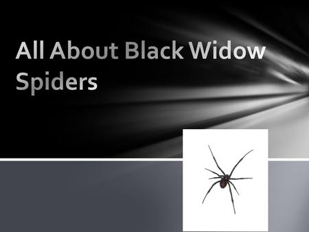 Black Widows eat bugs. Black Widows rap them up. Black Widows put juices in the bug then it starts sucking it's food What to eat and how.