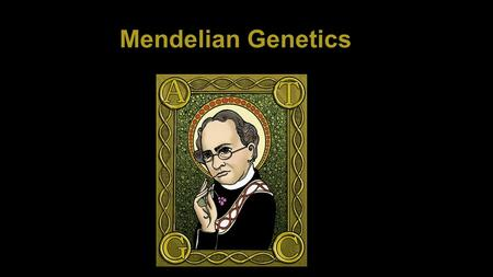 Mendelian Genetics. Genes- genetic material on a chromosome that codes for a specific trait Genotype- the genetic makeup of the organism Phenotype- the.