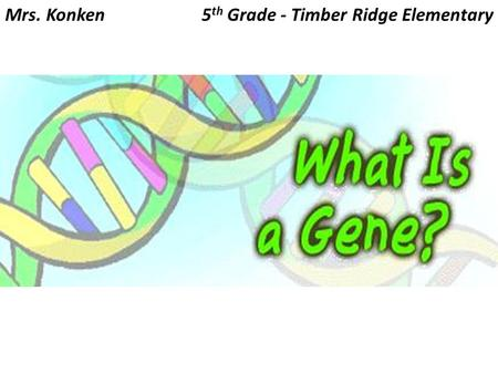 Mrs. Konken5 th Grade - Timber Ridge Elementary. Genes are found on tiny spaghetti-like structures called chromosomes and chromosomes are found inside.