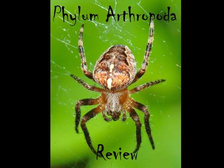 Phylum Arthropoda Review. Word Bank Complete metamorphosis herbivores pesticides swimmerets exoskeleton bilateralantennaemolting Egg hatches to larva.