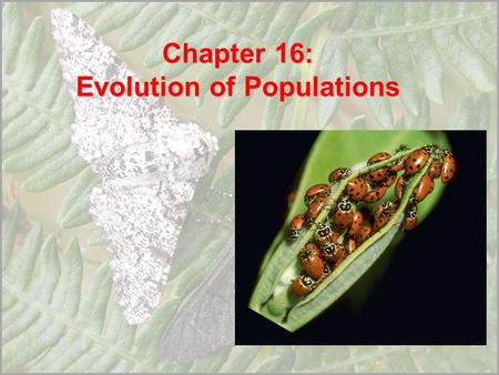 Chapter 16: Evolution of Populations. 16.1 Genes and Variation Variation and Gene Pools Gene pool – all genes in a population of organisms Allele frequency.