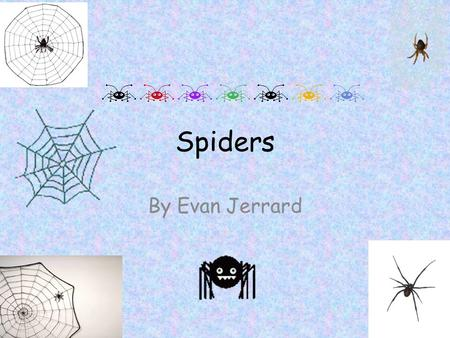 Spiders By Evan Jerrard.