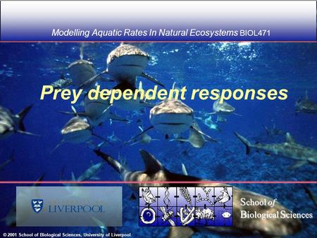 Prey dependent responses Modelling Aquatic Rates In Natural Ecosystems BIOL471 © 2001 School of Biological Sciences, University of Liverpool S chool of.