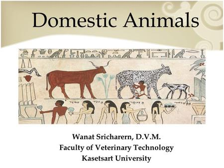 Domestic Animals Wanat Sricharern, D.V.M. Faculty of Veterinary Technology Kasetsart University.