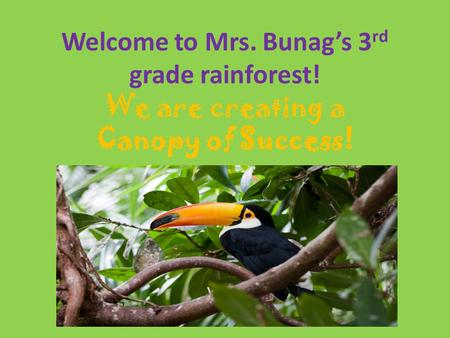 Welcome to Mrs. Bunag's 3 rd grade rainforest! We are creating a Canopy of Success!
