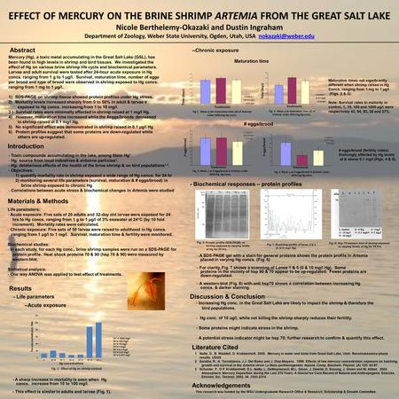 EFFECT OF MERCURY ON THE BRINE SHRIMP ARTEMIA FROM THE GREAT SALT LAKE Nicole Berthelemy-Okazaki and Dustin Ingraham Department of Zoology, Weber State.