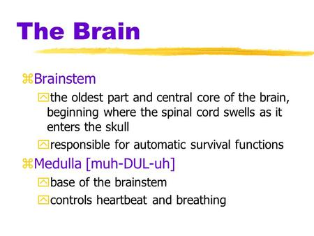 The Brain zBrainstem ythe oldest part and central core of the brain, beginning where the spinal cord swells as it enters the skull yresponsible for automatic.