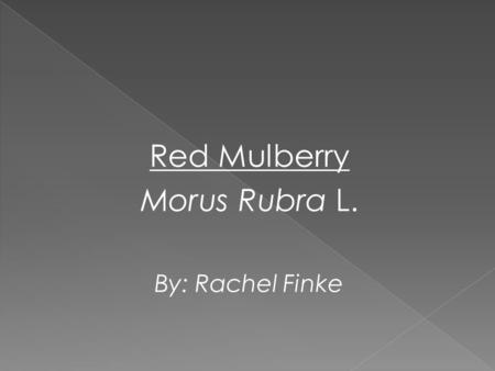 Red Mulberry Morus Rubra L. By: Rachel Finke. Classification: (1) KingdomPlantaePlants SubkingdomTracheobionteVascular Plants SuperdivisionSpermatophytaSeed.