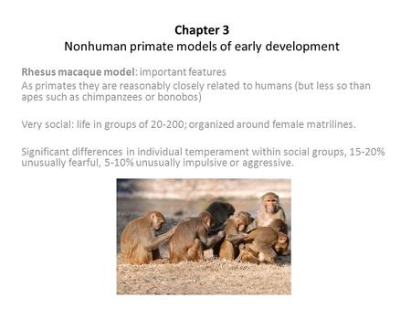 Chapter 3 Nonhuman primate models of early development Rhesus macaque model: important features As primates they are reasonably closely related to humans.