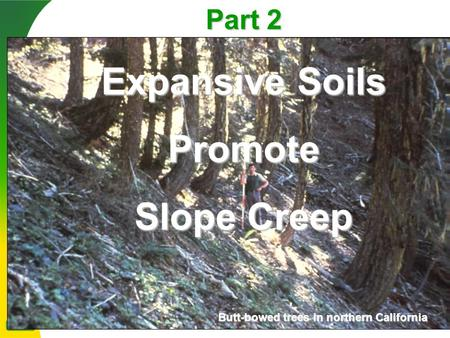 Part 2 Expansive Soils Promote Slope Creep Butt-bowed trees in northern California.