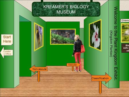 KREAMER'S BIOLOGY MUSEUM Welcome to the Plant Kingdom Exhibit. (Kingdom Plantae) Nonvascular Classification Start Here Curator' s Office Vascular Chloroplasts.
