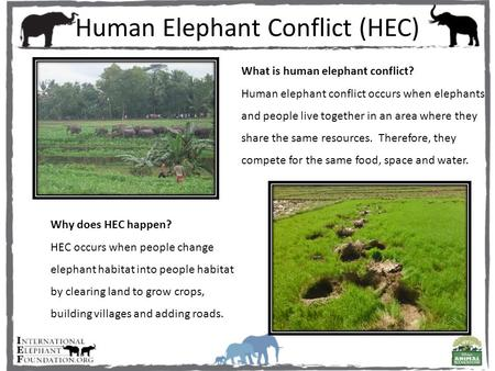 Human Elephant Conflict (HEC) What is human elephant conflict? Human elephant conflict occurs when elephants and people live together in an area where.