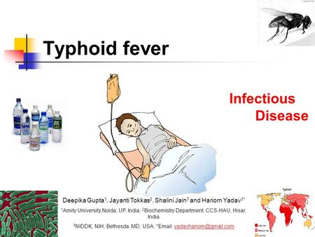 Typhoid Diet