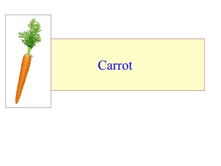Carrot. ♥ Root vegetables include carrots, radish, turnip, beets, parsnips, rutabagas, horse radish and Jerusalem artichoke. ♥ These crops are grown for.
