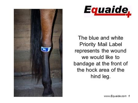 Www.Equaide.com 1 The blue and white Priority Mail Label represents the wound we would like to bandage at the front of the hock area of the hind leg.