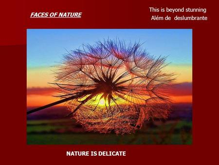 This is beyond stunning Além de deslumbrante NATURE IS DELICATE FACES OF NATURE.