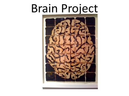 Brain Project. Group Project with 3-5 people in a group of your choosing (within hour groups) Create a model of the brain including the parts and areas.