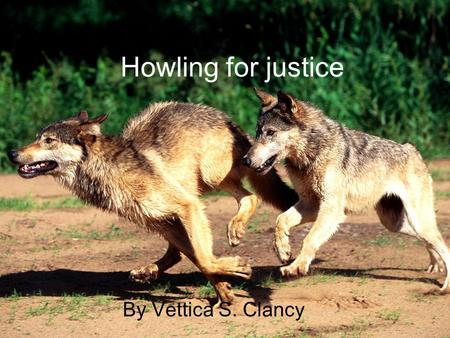 Howling for justice By Vettica S. Clancy. wolfs These graceful mammals are the very first decadence of our beloved k9. if wolfs werent here no other dog.