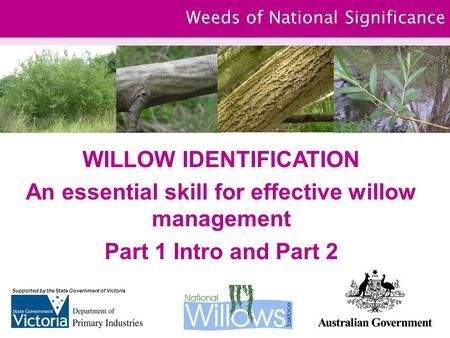 Weeds of National Significance WILLOW IDENTIFICATION An essential skill for effective willow management Part 1 Intro and Part 2 Supported by the State.