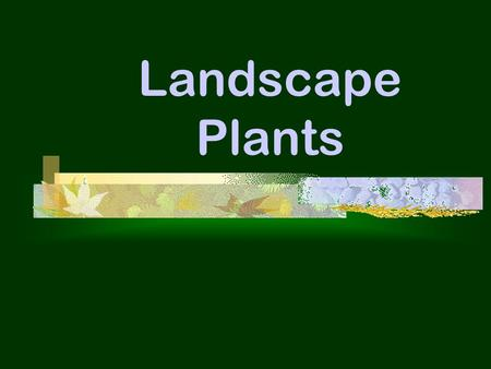 Landscape Plants. Objectives  List & describe the 6 shapes of trees.  List & describe the 7 shapes of shrubs.  Describe the factors that are important.