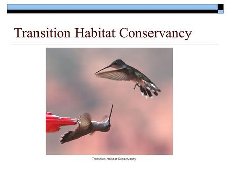 Transition Habitat Conservancy.  Mission :  Transition Habitat Conservancy is dedicated to preserving open space and natural wildlife habitat along.