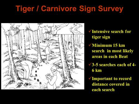 Tiger / Carnivore Sign Survey Intensive search for tiger sign Minimum 15 km search in most likely areas in each Beat 3-5 searches each of 4- 6 km Important.