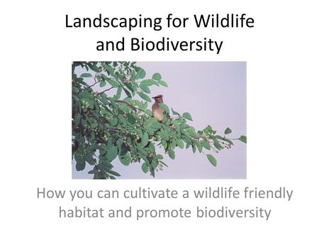 Landscaping for Wildlife and Biodiversity How you can cultivate a wildlife friendly habitat and promote biodiversity.