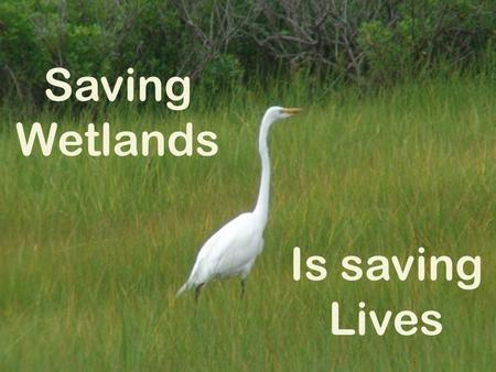 Saving Wetlands Is saving Lives prepared by ECOSCI The Science and Ecology Club The Academy of Mount St. Ursula Bronx, NY, USA.